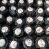 木耳菌棒 大量供应、质优价廉