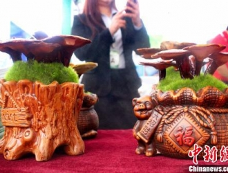 中新网:第十二届中国蘑菇节福建漳州开幕