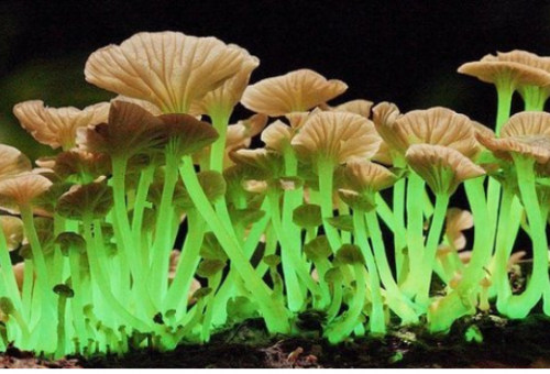 Mushroom Enthusiasts to Host Renowned Ph