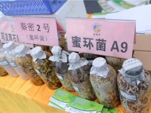A2 陕西庆瑞丰食药用菌科技有限公司 (4)
