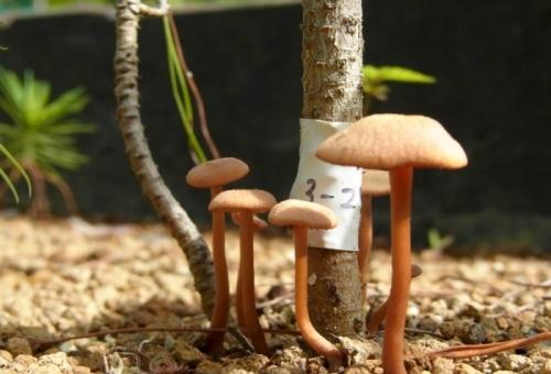 森林の安定と変化には地下の菌類ネットワー
