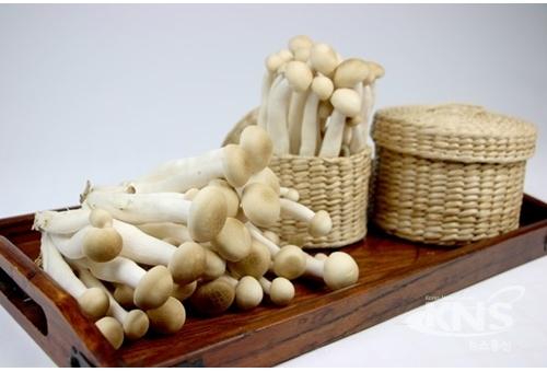 월드팜 해송이버섯, 까다로운 생육 조건 지