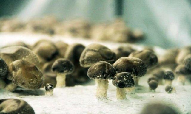 mushrooms-la-caverne-889x532