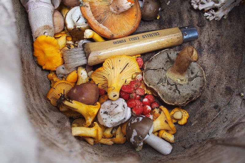 foraging-mushrooms-basket-800<em></em>&#120;800