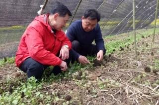 带民致富不老心——记随县羊肚菌产业首席技术顾问罗信昌