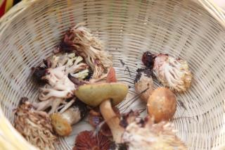 小菌子还需大监管 云南全力打好野生食用菌中毒防控工作保卫战