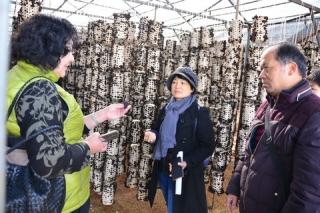 石林诞生云南首个拥有自主知识产权的黑木耳菌种 ()
