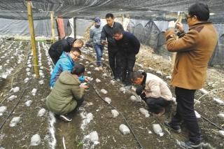 近5吨怒江羊肚菌将抵珠海  每千克售价198元 ()