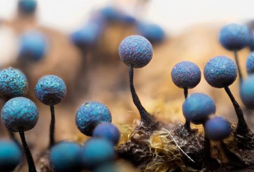 粘菌の「知性」に注目 歌舞伎「ナウシカ」