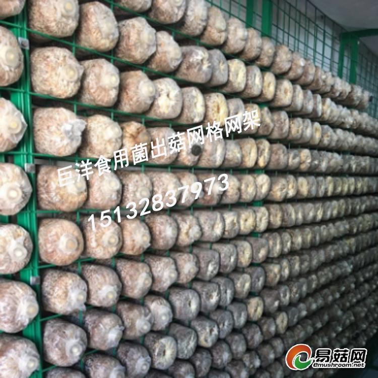蘑菇网4-1