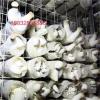 杏鲍菇专用网格网片生产厂家