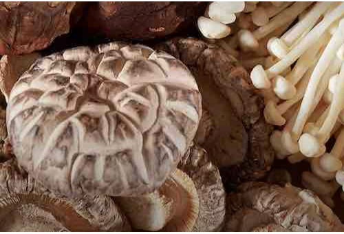 Eating Mushrooms a Few Times a Week Coul