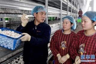 陕西勉县:促进菌菇产业向工厂化转型
