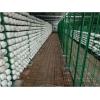 出菇房网格架出菇厂家平菇出菇架蘑菇网格网片培养架