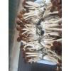 油茶菇鲜菇