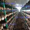 香菇培育架子 养殖香菇菌架