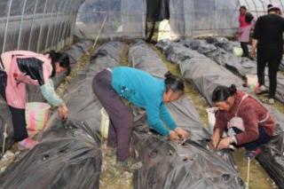 看贵州各地农民种植食用菌有什么门道 ()