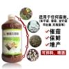 猪肚菇的高产栽培管理技术要点有哪些菌菇生态宝购买