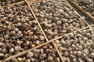 香菇酱里的调味品转型升级新思维 ()