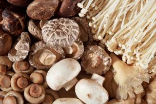 牡丹江:整合多种资源雪城食用菌产业加快转型升级