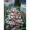 合作社基地直供鲜香菇