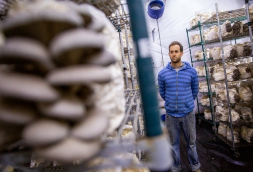 Development plans dampen mushroom grower