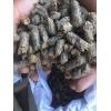 食用菌新型栽培基质棕榈纤维颗粒