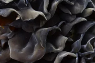 阿克苏地区:种植黑木耳 增收有保障