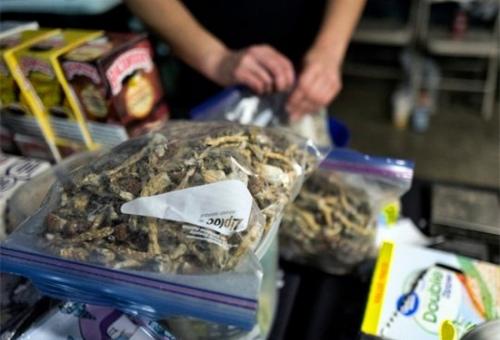 Oakland City Council looks to decriminalize 'magic mushrooms' after Denver vote