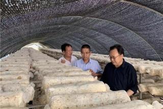 何方明副会长一行赴陕西省汉中?#26800;?#30740;食用菌产业发展情况