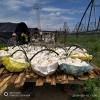 黑龙江海林猴头菇产地直销 质优价廉