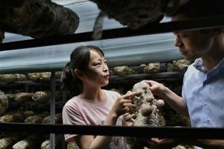 无惧高温 这个山村为啥一年四季都能产鲜菇 ()