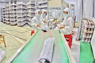 天峨:这个地方栽培食用菌,年产值达2000万元,惠及1470人 ()