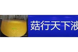 菇行天下液体菌种培训第47期(8.1)开始报名 ()