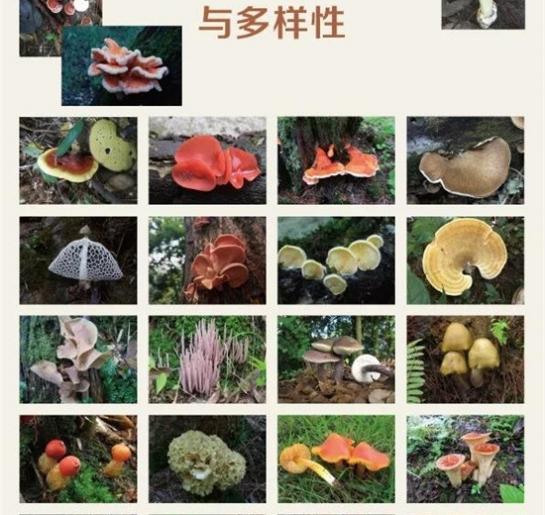 """《菌物学报》""""中国菌物资源与多样性专刊""""征稿通知"""