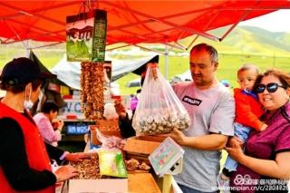 品草原贡菇 赏牧人风采—第四届草原蘑菇节将在阿拉沟乡开幕 ()