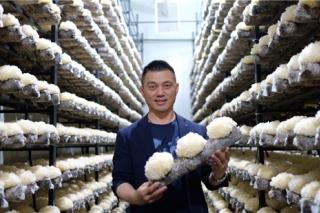雷华乔:工厂化食用菌技术引领者 ()