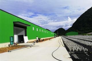 荔波县甲良食用菌种植项目一期显成效 ()