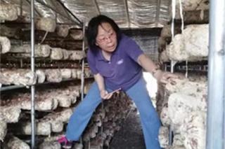 国家食用菌产业技术体系首席科学家张金霞: 带着蘑菇脱贫攻坚 ()