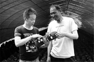 宁陕县:发展食用菌助农增收 ()