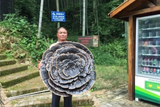 直径近1米巨型灵芝助阵龙南第三届旅游文化节