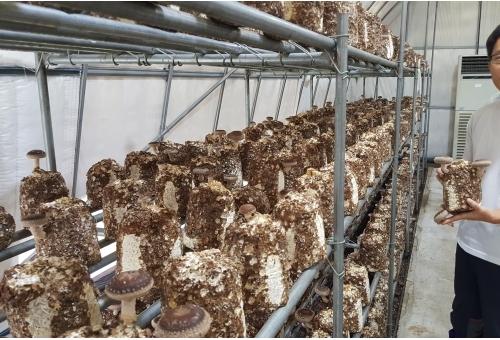 버섯으로 이룬 농부의 꿈, 합천 '더