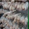 蘑菇网片养殖 betvlctor伟德出菇架 平菇出菇网格 蘑菇养菌层架