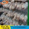 浸塑蘑菇养殖网片 betvlctor伟德培养架 平菇出菇网片 香菇养菌层架
