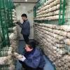 厂家批发食用菌网格培养架蘑菇养殖网格网架平菇出菇架