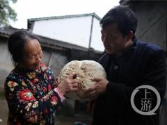 """重慶云陽驚現2.75公斤""""馬屁包""""野生菌 ()"""