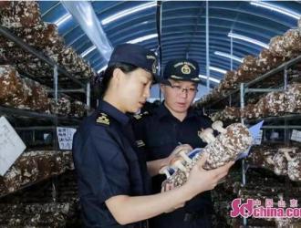 濟南海關助力食用菌菌棒走出去 前三季度出口量全國第一 ()