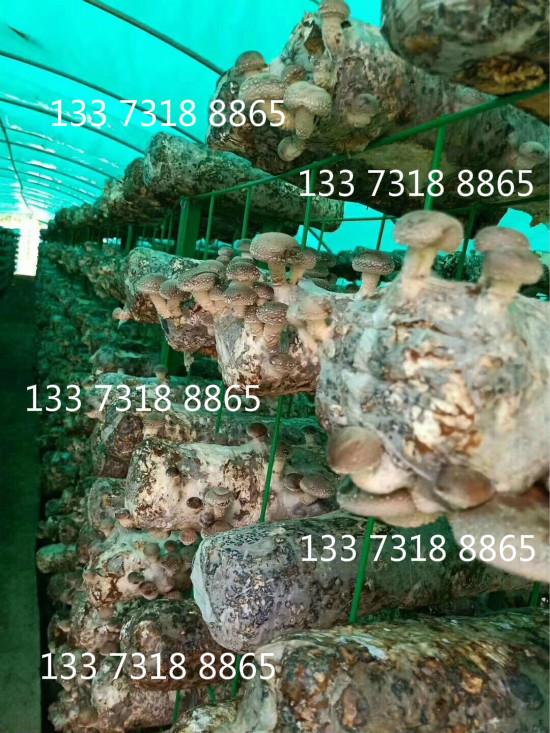 网格香菇架