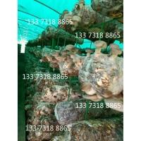 出菇房网架立体式菌类种植网蘑菇网片厂家