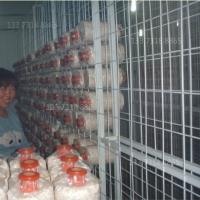 出菇网格betvlctor伟德立体出菇网架厂家平菇出菇网格架